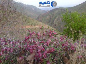 جشنواره بزرگ عکسهای گردشگری - نوروز 97 شرکت کننده گونا مهردانش - روستای دشه پاوه